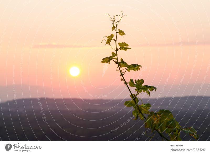sunset wine Umwelt Natur Landschaft Himmel Horizont Sonne Sonnenaufgang Sonnenuntergang Herbst Klima Wetter Pflanze Sträucher Nutzpflanze Hügel Berge u. Gebirge