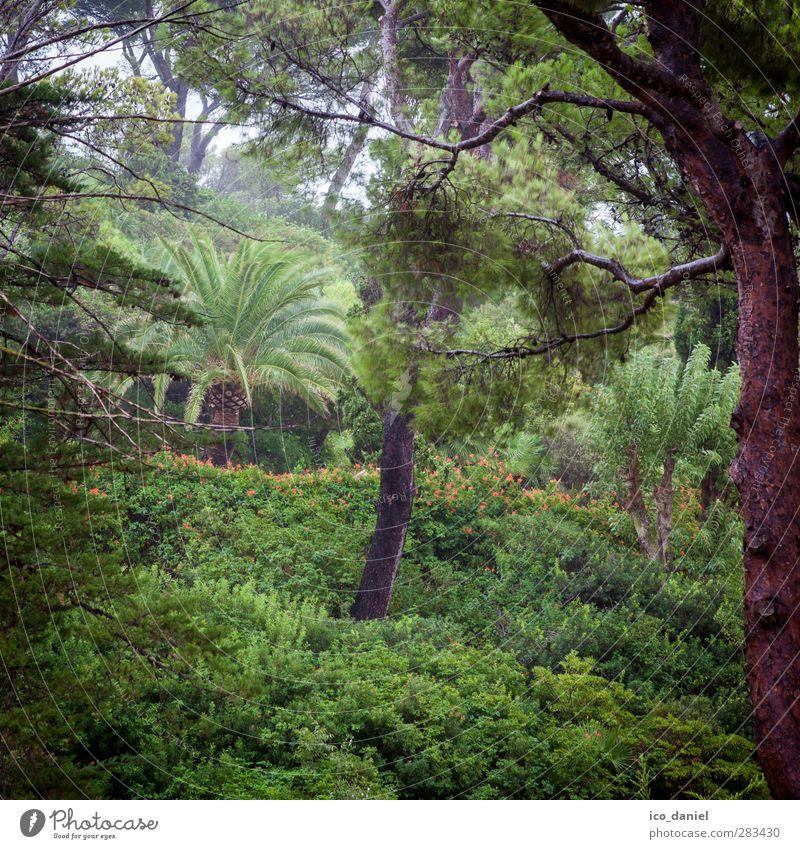 Regenwald Umwelt Natur Landschaft Pflanze Tier Urelemente Sommer Klima Wetter schlechtes Wetter Wind Nebel Grünpflanze Garten Park Wald nass grün Mallorca