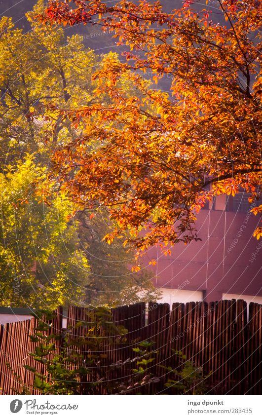 strahlende Blätter! Umwelt Natur Landschaft Pflanze Herbst Schönes Wetter Baum Garten Park Blatt Herbstlaub herbstlich Jahreszeiten Zaun Gartenzaun Stimmung