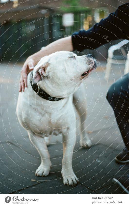 genießer° Tier Haustier Hund 1 genießen Spielen Farbfoto Außenaufnahme Tag Sonnenlicht Starke Tiefenschärfe Froschperspektive Tierporträt