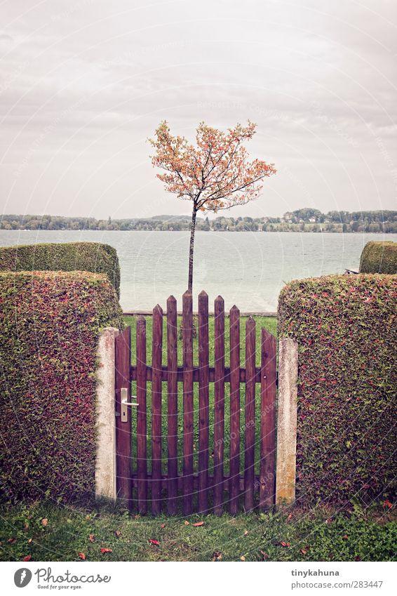 Parzelle mit Seeblick Baum Einsamkeit Herbst klein Garten Ordnung trist retro Seeufer Zaun Hecke Ordnungsliebe