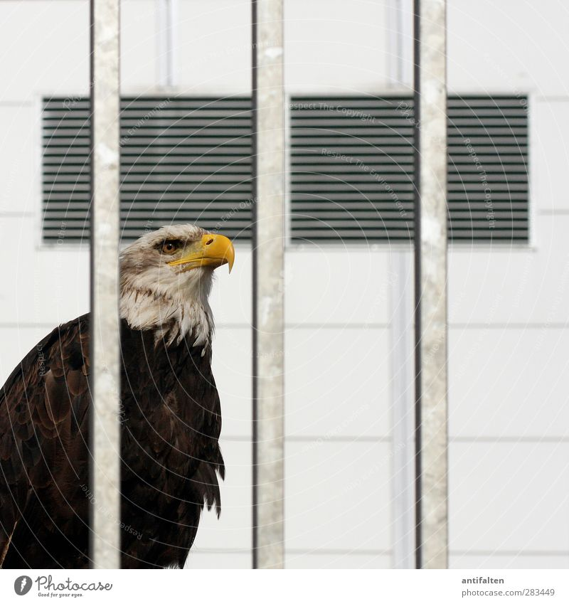 Zur Schau gestellt weiß Tier gelb Auge Wand grau Mauer Metall Linie Vogel braun Fassade Wildtier Beton Flügel Streifen