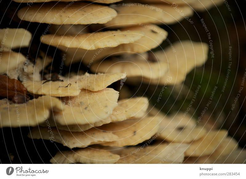 Schicht-Pilze Umwelt Natur Urelemente Erde Sonne Sonnenlicht Herbst Schönes Wetter Pflanze Baum alt dehydrieren Wachstum dunkel fest Zusammensein nass Wärme