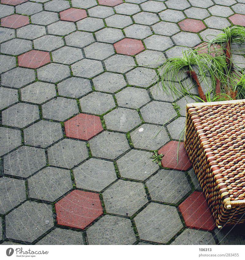 ffff,00ak6ed ffffcuk Lifestyle grau grün Palme Fälschung Wabe Wabenmuster umgefallen Liege Sturm Dekoration & Verzierung Farbfoto Außenaufnahme Menschenleer Tag