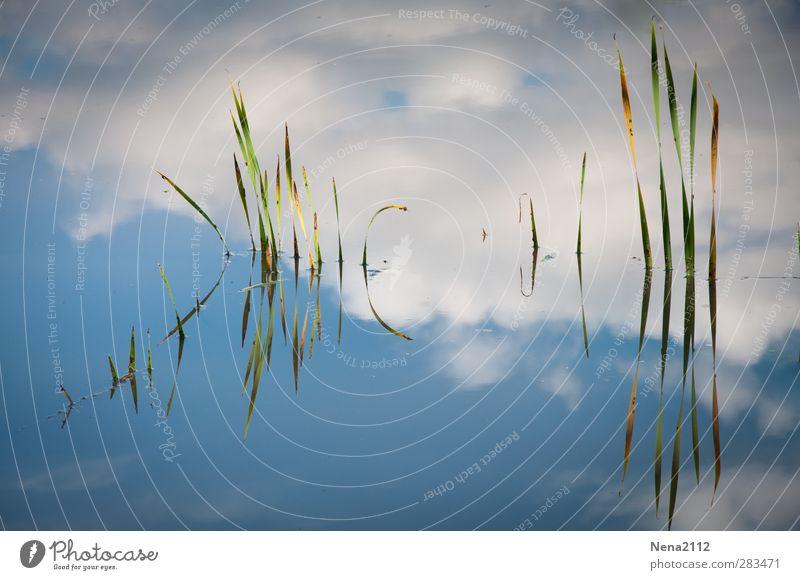 )IIII( )iIIIII Himmel Natur blau Wasser Pflanze Wolken See Teich Bambus