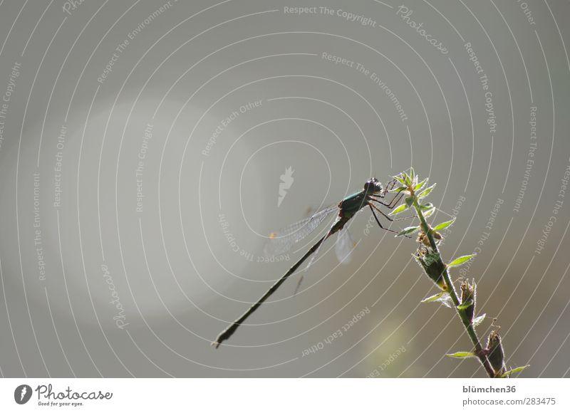 Sit and wait Natur grün Tier Stimmung natürlich fliegen sitzen Wildtier elegant frei Pause Seeufer dünn Sonnenbad exotisch Teich