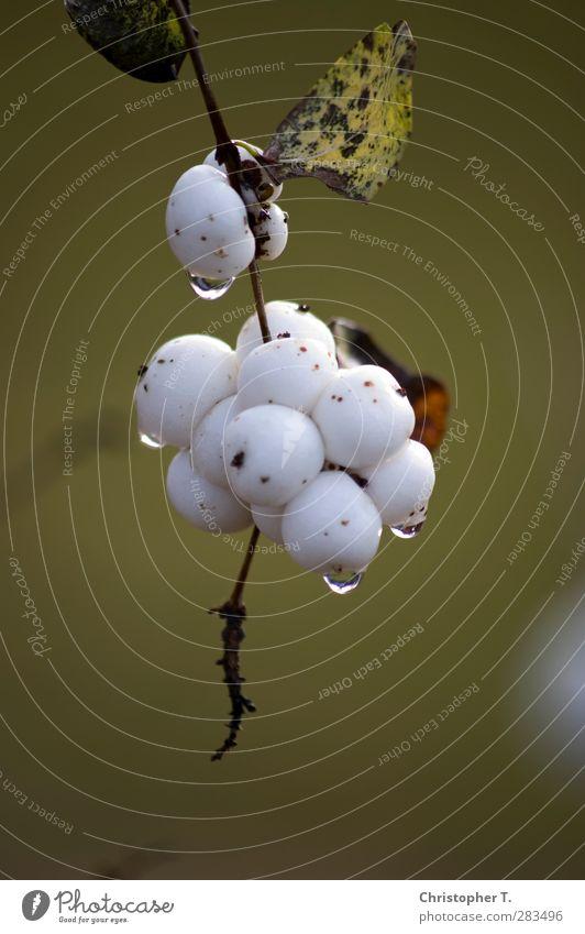 Unbenannt #6 Umwelt Natur Pflanze Wasser Wassertropfen Herbst Sträucher Grünpflanze Garten Park weiß ruhig Farbfoto Außenaufnahme Nahaufnahme Detailaufnahme