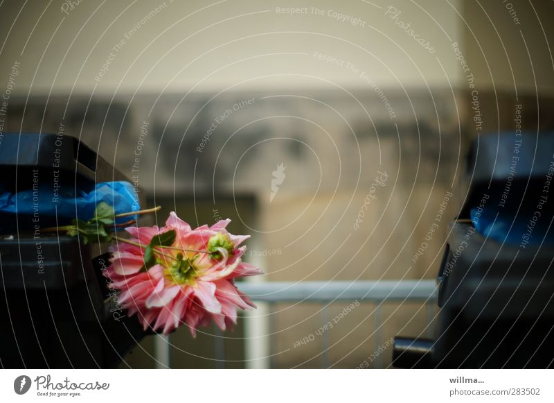 stadtmelancholie [gefangen in plastik] Umwelt Blume Chrysantheme Wand Geländer verblüht dunkel Müllbehälter Müllsack welk Wegwerfgesellschaft Biomüll wegwerfen