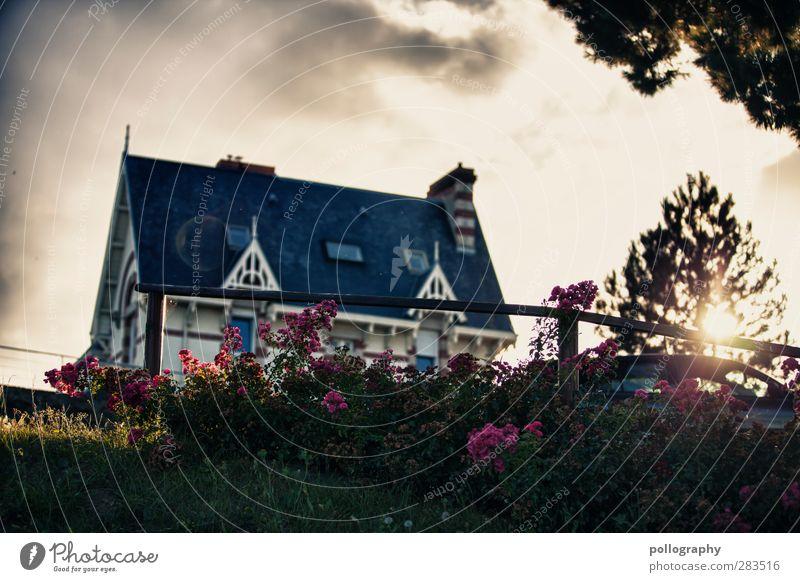 idyllisch wohnen Himmel Natur Sommer Pflanze Baum Sonne Blume Blatt Wolken Haus Fenster Wiese Gras Blüte Garten PKW