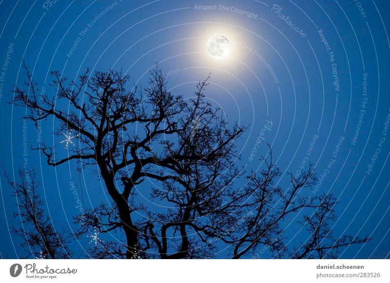alle Vampire fliegen hoch !! Umwelt Natur Himmel Wolkenloser Himmel Nachthimmel Mond Vollmond Winter bedrohlich dunkel gruselig blau Baumkrone Gedeckte Farben