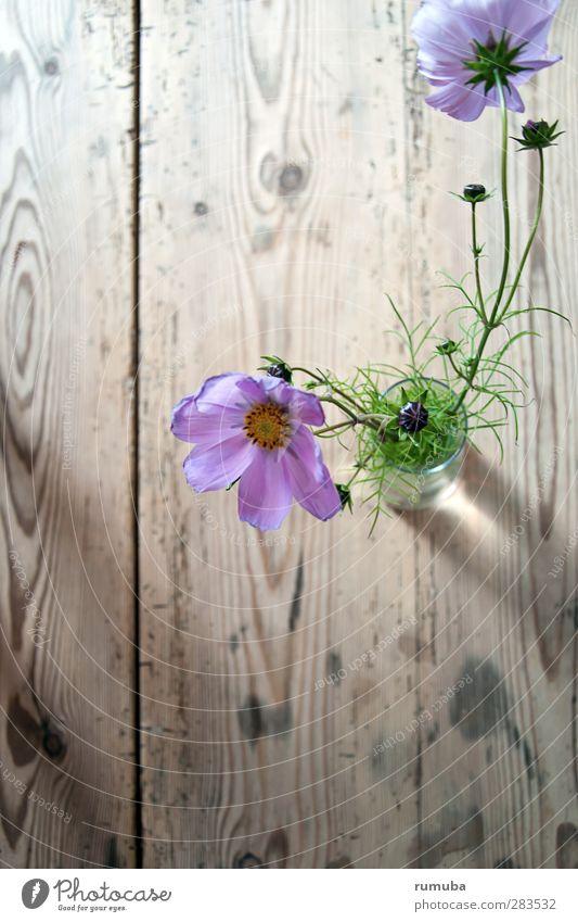 dk | blomst Pflanze grün schön Blume Blüte Liebe Stil Holz Lifestyle rosa Wohnung frisch Dekoration & Verzierung Geburtstag Fröhlichkeit Tisch