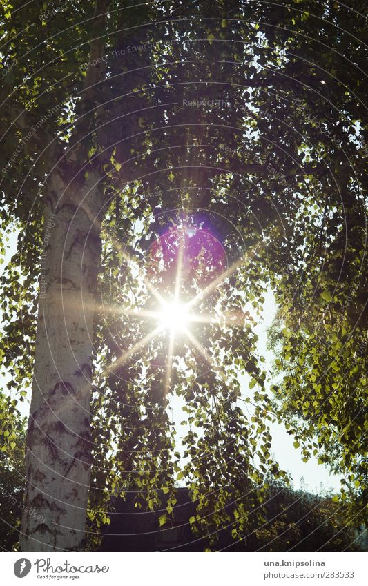 tree hugger Natur grün Pflanze Baum Blatt Umwelt hell natürlich leuchten Birke