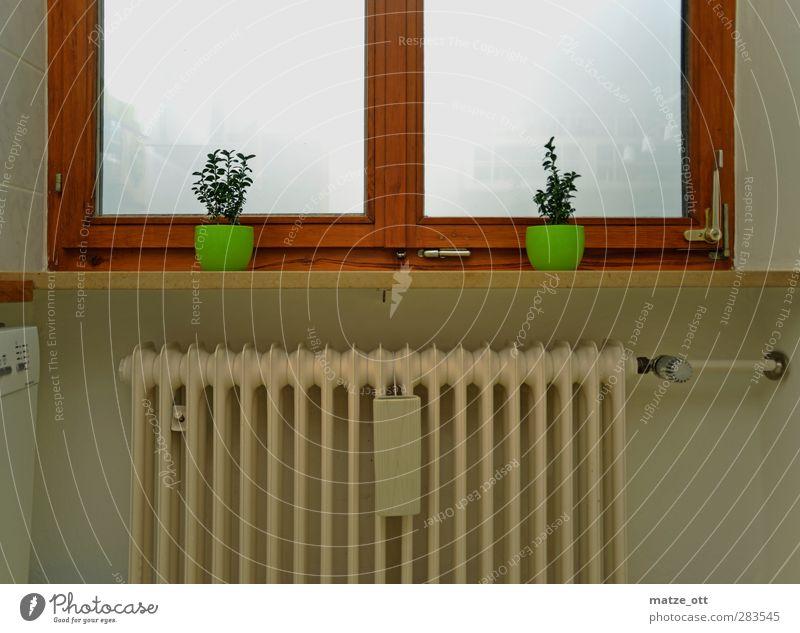 Zwei ungleiche Zwillinge Fenster Wärme Wohnung Nebel Häusliches Leben Dekoration & Verzierung Heizkörper Heizung Blumentopf heizen Energie sparen Holzfenster