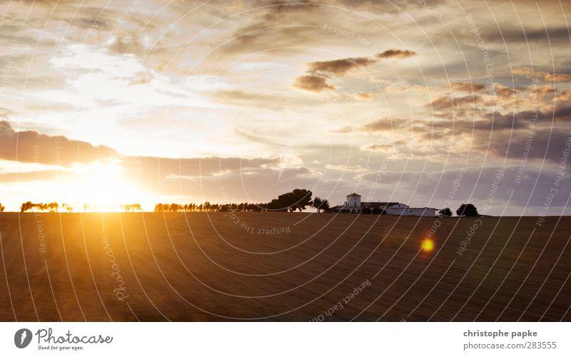 Spanischer Sonnenuntergang Ferien & Urlaub & Reisen Sommer Sommerurlaub Landwirtschaft Forstwirtschaft Himmel Sonnenaufgang Schönes Wetter Baum Feld Dorf Haus