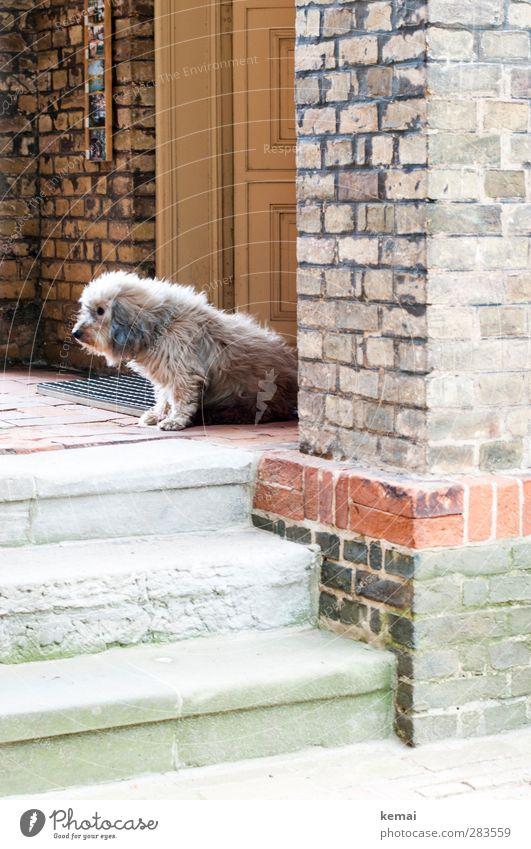 AST5   Torwächter Hund Tier Haus Wand Mauer Traurigkeit Tür Fassade Treppe sitzen Kirche Fell Wachsamkeit Haustier Unlust