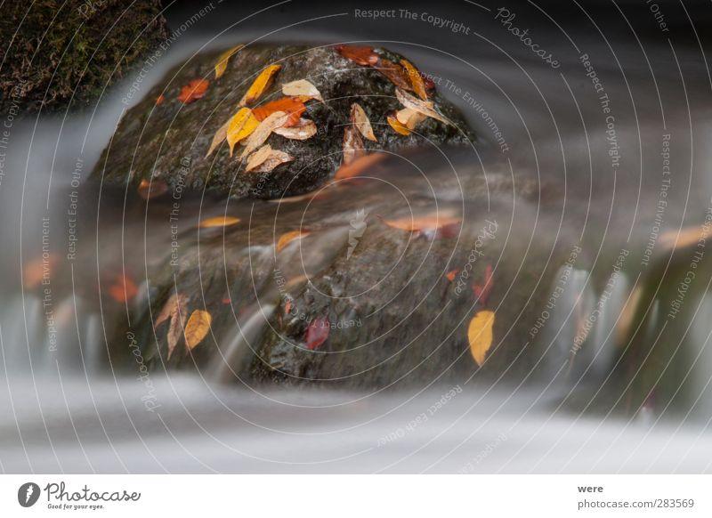 Fels im Strom Landschaft Pflanze Wasser Herbst Blatt Bach Fluss Wasserfall Stein Stimmung Kraft geduldig Blumen und Pflanzen Herbstfärbung Japan Japangarten