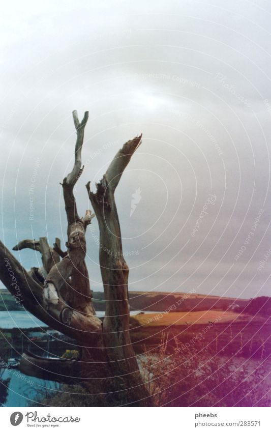 How Come You Never Go There Natur Baum Meer Landschaft Winter kalt Herbst Küste Sträucher Ast Bucht kahl Republik Irland Farbverlauf Kinsale