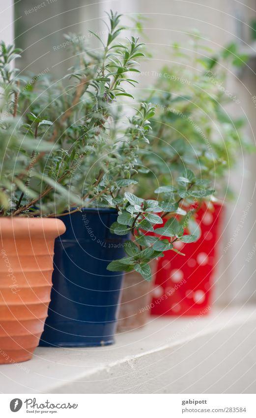 noch ein Rest vom Sommer blau grün Sommer Pflanze rot Farbe Blatt Fenster braun natürlich Fröhlichkeit Sträucher Idylle Schönes Wetter Kochen & Garen & Backen Freundlichkeit