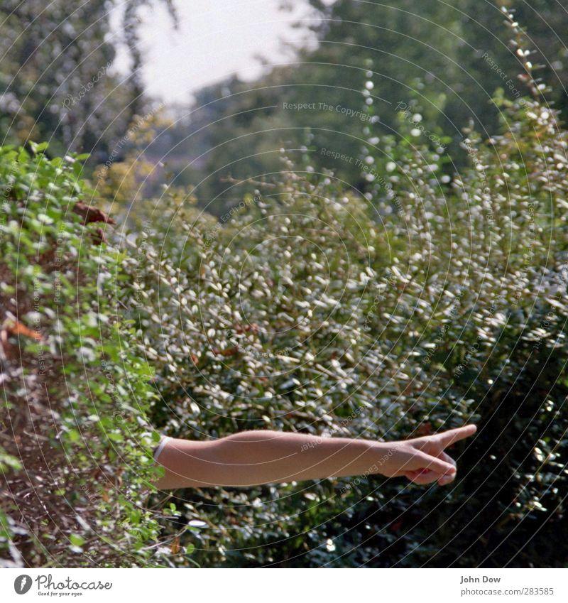 Schatzsuche Ausflug Abenteuer Freiheit Arme Hand Finger Sträucher gestikulieren richtungweisend Richtung zeigen Jagd Hinweis rechts Zeigefinger Schnitzeljagd