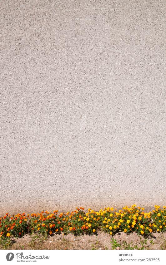 Ordungsliebe Pflanze Blume ruhig Wand Gras grau Mauer Fassade leer Sauberkeit gewissenhaft