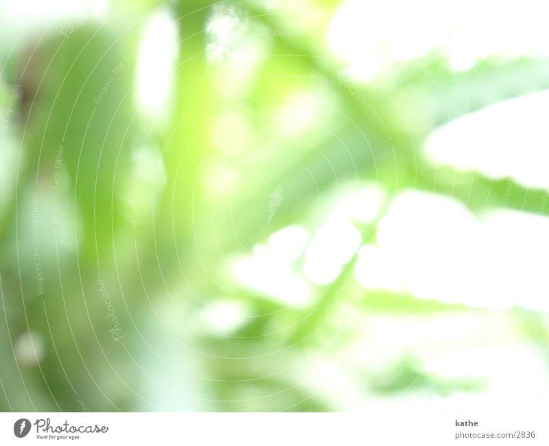 fensterbrett04 Aloe Pflanze grün Fensterbrett Unschärfe Licht