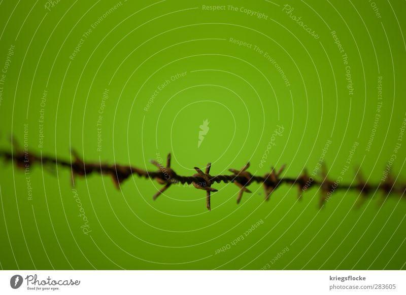 Grüne Zone Natur Wiese Metall Rost eckig rebellisch Spitze stachelig grün Schutz Schmerz Angst Schüchternheit Respekt Stacheldraht Zaun Grenze Barriere Trennung