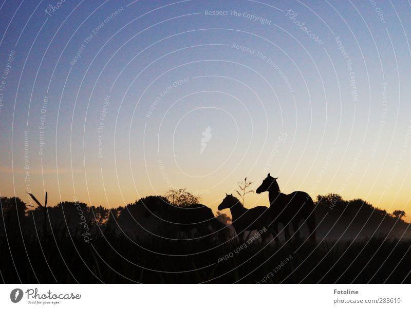 Guten Morgen Tag! Umwelt Natur Landschaft Pflanze Tier Himmel Wolkenloser Himmel Herbst Baum Gras Wiese Haustier Pferd 2 dunkel natürlich Weide Farbfoto
