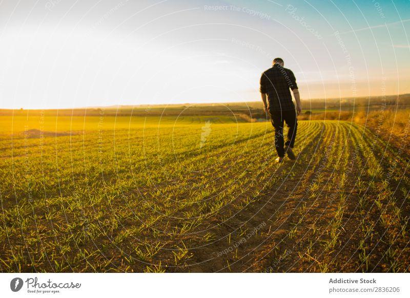 Mann geht auf einem sonnigen Feld spazieren Freude Sommer Freiheit Natur Aktion Mensch Jugendliche Wiese Gras Energie grün Lifestyle frei rennen genießend
