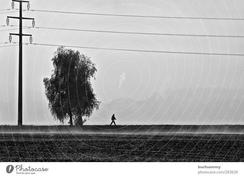 Einsamer Wanderer Kabel Energiewirtschaft Mensch maskulin Mann Erwachsene 1 Natur Herbst Nebel Baum Feld gehen laufen wandern dünn grau schwarz Gefühle Stimmung