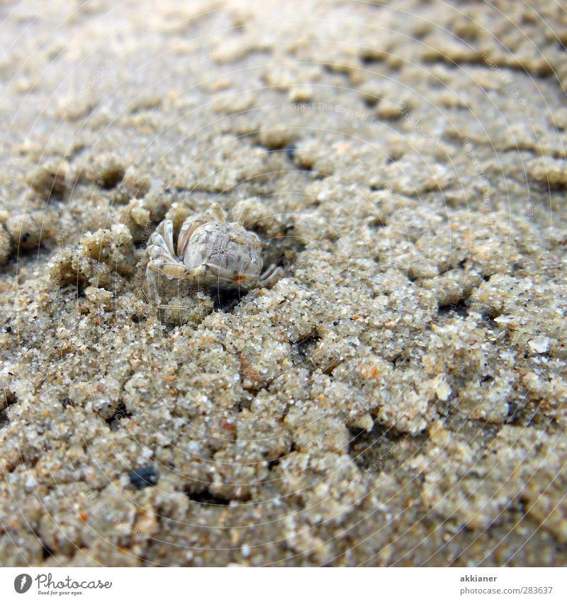 1,2,3,4 Eckstein... Umwelt Natur Tier Urelemente Erde Sand Küste Strand Meer Wildtier klein nass natürlich Krabbe Farbfoto Gedeckte Farben Außenaufnahme