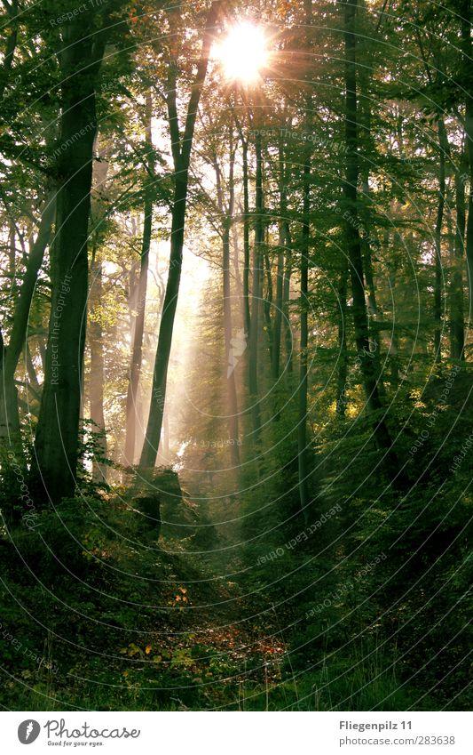 Lichtschein Umwelt Natur Sonne Sonnenlicht Sommer Schönes Wetter Nebel Pflanze Baum Gras Sträucher Grünpflanze Wald frisch gruselig Schutz ruhig Neugier