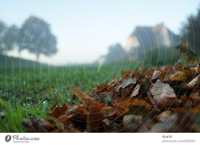 Nach dem Harken Umwelt Wolkenloser Himmel Herbst Schönes Wetter Nebel Baum Gras Blatt Garten Wiese Haus Einfamilienhaus Tau Dunst verblüht dehydrieren kalt nass