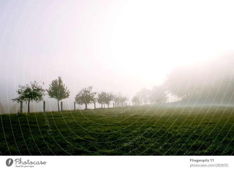 Morgenstimmung Natur grün Pflanze Baum Sonne ruhig Landschaft Wald Umwelt dunkel Wiese kalt Gras Stimmung Park Eis