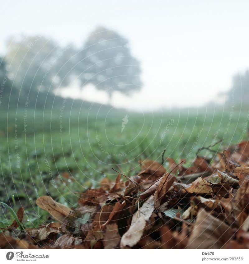 Da kommt bestimmt noch 'was nach ... Natur blau alt grün weiß Pflanze Baum Blatt schwarz Umwelt Wiese kalt Herbst Gras Garten Zeit