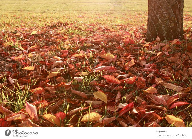 Herbstblätter Natur grün Pflanze Baum rot Blatt gelb Wiese Wärme Gras Stimmung braun Wetter Erde gold