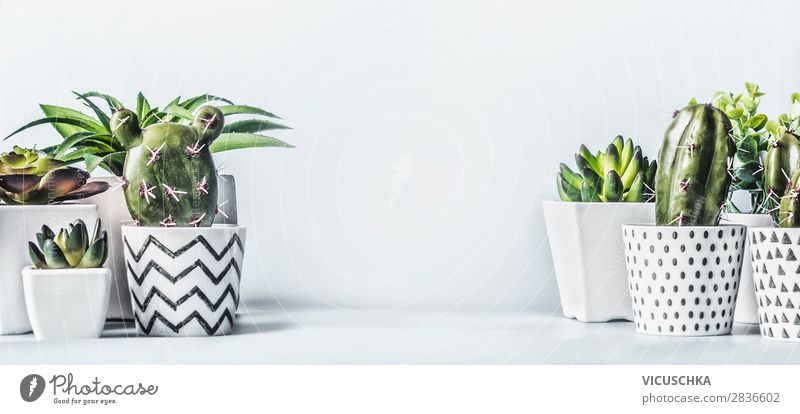Sukkulenten Zimmerpflanzen in Blumentöpfe Stil Design Häusliches Leben Innenarchitektur Dekoration & Verzierung Natur Pflanze Topfpflanze Mauer Wand Fahne Aloe