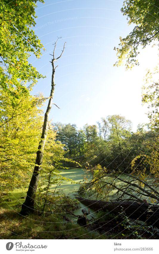 entengrützelichtung Himmel Natur blau grün Pflanze Baum Landschaft Wald Wachstum einzigartig Urwald Endzeitstimmung Wildpflanze ursprünglich