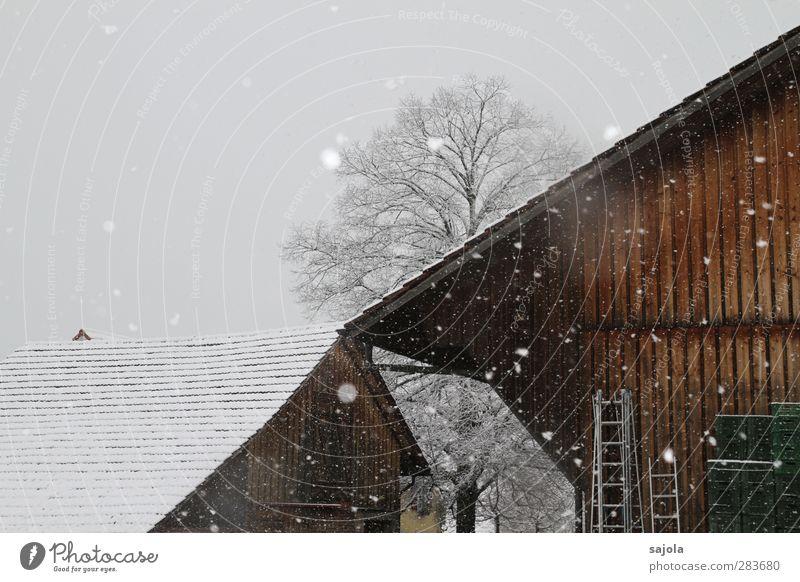 wintereinbruch Umwelt Natur Pflanze Himmel Winter Schnee Schneefall Baum Scheune Bauernhof kalt trist braun grau weiß Farbfoto Außenaufnahme Menschenleer