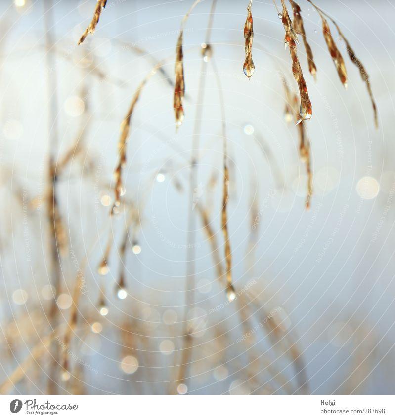 Tautröpfchen... Umwelt Natur Pflanze Herbst Nebel Gras Seeufer Tropfen glänzend hängen leuchten dehydrieren Wachstum ästhetisch authentisch außergewöhnlich