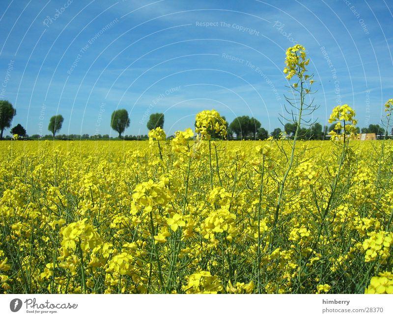 gelbes feld Natur Baum Blume Pflanze Frühling Landschaft Feld Ausflug Spaziergang Landwirtschaft Erdöl ökologisch Düsseldorf Ferien & Urlaub & Reisen