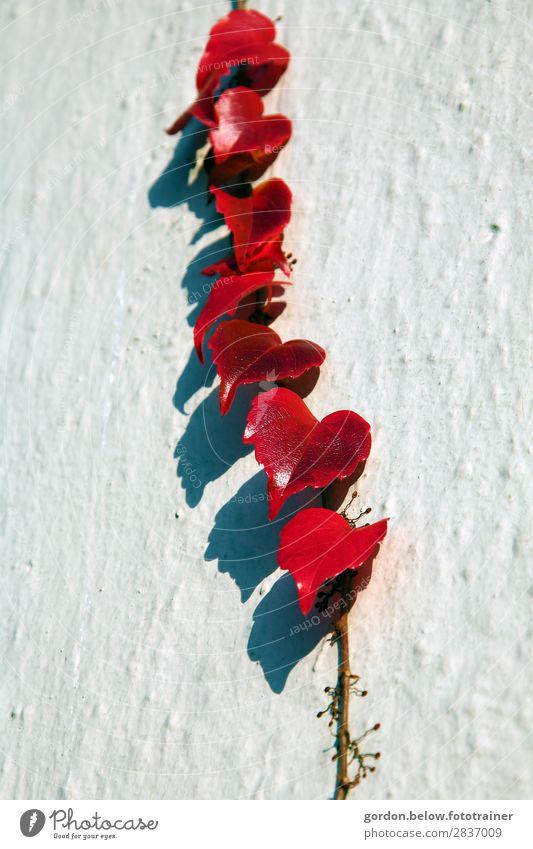 Schattenspiele Natur Pflanze Sommer Blatt Grünpflanze Menschenleer Mauer Wand Fassade ästhetisch authentisch weich braun grau rot schwarz weiß Frühlingsgefühle