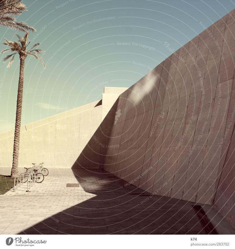 bikes & palmtrees Himmel Wolkenloser Himmel Baum Palme Mauer Wand Fahrrad Stein exotisch groß heiß modern Stadt Wärme blau gelb Coolness Fahrradparkplatz