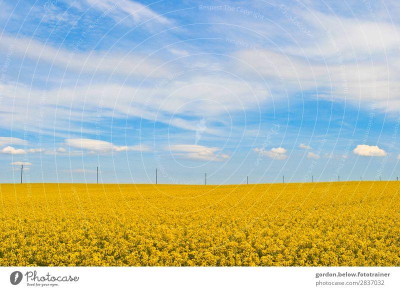 #Frühling Himmel Ferien & Urlaub & Reisen Natur Pflanze blau weiß Landschaft Wolken ruhig Freude Leben gelb braun grau Ausflug