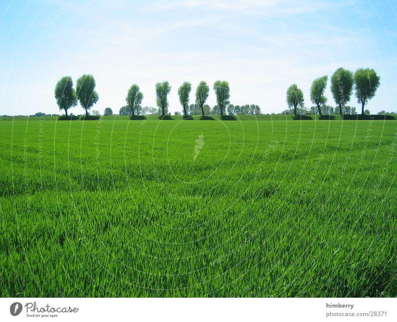 grüne welle Düsseldorf Rhein Küste Wiese Sommer Baum Natur Landschaft Gras Feld Himmel Landwirtschaft Bioprodukte Biologische Landwirtschaft ökologisch Frühling
