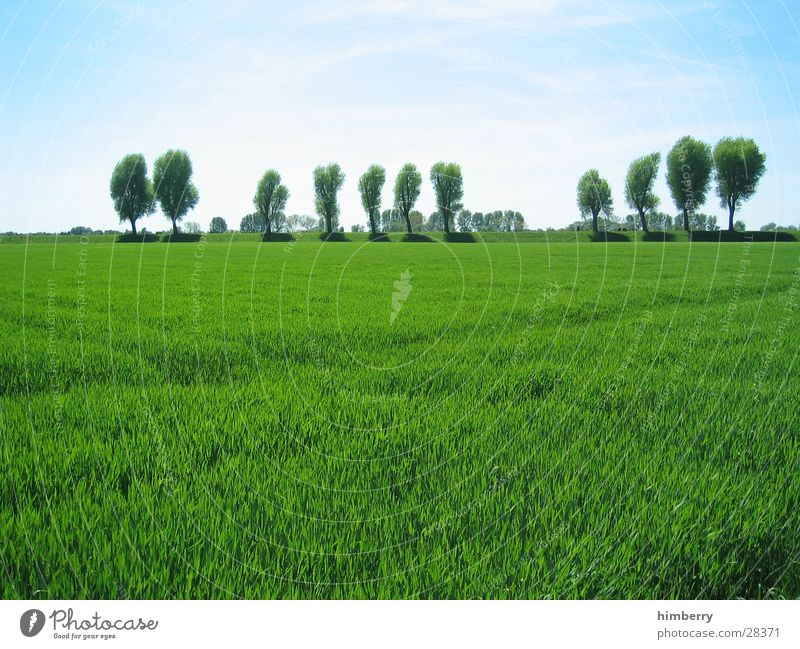 grüne welle Natur Himmel Baum grün Sommer Wiese Gras Frühling Landschaft Feld Küste Landwirtschaft ökologisch Düsseldorf Bioprodukte Biologische Landwirtschaft