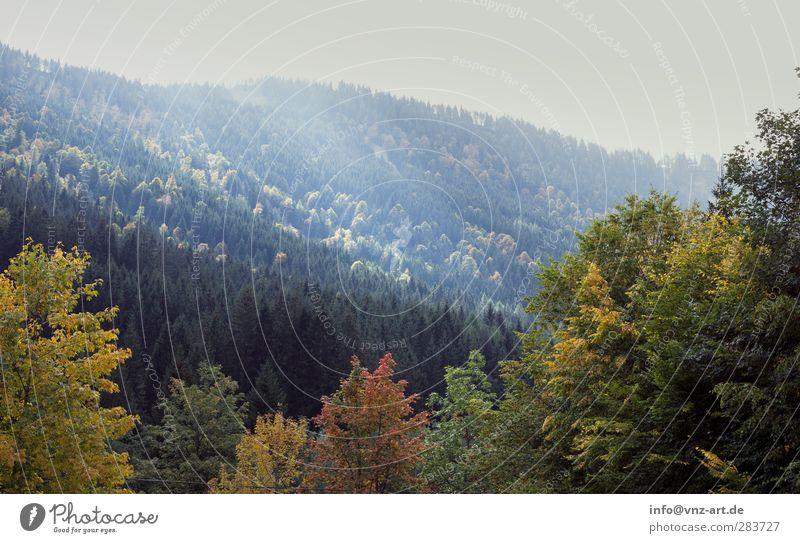 Walde Himmel Natur blau Ferien & Urlaub & Reisen Baum Sonne gelb Berge u. Gebirge Herbst grau Stimmung orange wandern Klettern Bergsteigen