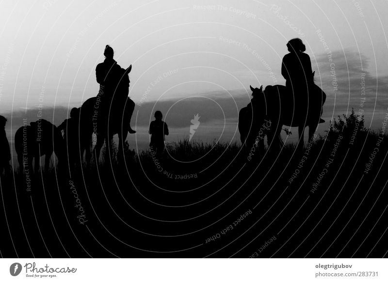 Mensch Natur Jugendliche Ferien & Urlaub & Reisen schön weiß Tier Landschaft schwarz Liebe Junge Frau feminin Herbst Gefühle grau Stil