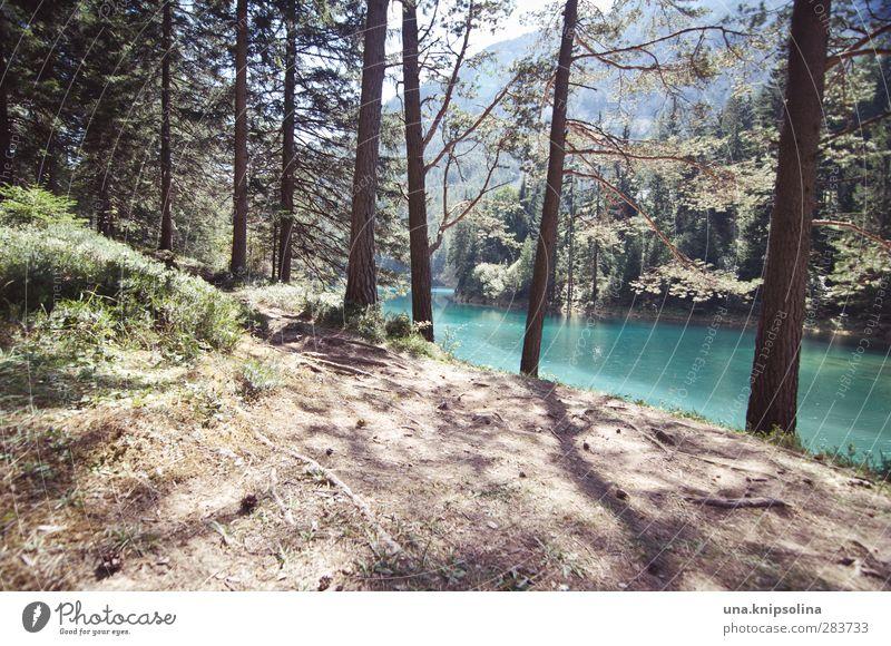grüner see Erholung ruhig Umwelt Natur Landschaft Wasser Wald Alpen Berge u. Gebirge See Gebirgssee Grüner See natürlich blau türkis deutlich Farbfoto