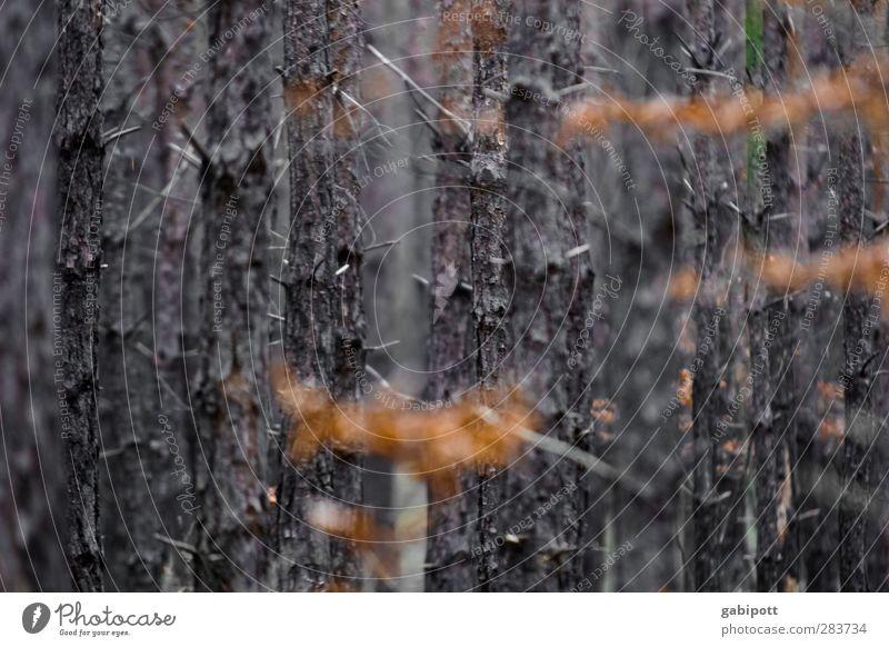 Frieden finden Natur Landschaft Pflanze Herbst Winter Baum Blatt Wald braun orange Gefühle Stimmung Ewigkeit Vergänglichkeit Zeit Ruheforst ruhig