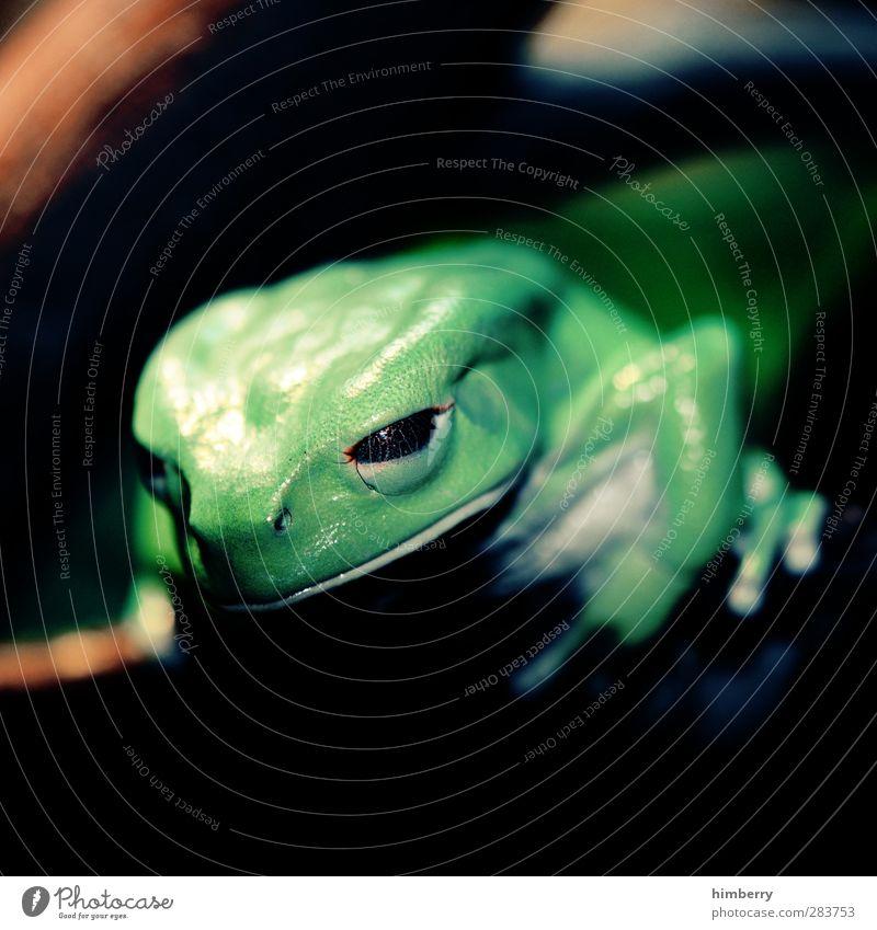 augapfel Umwelt Natur Klima Klimawandel Wetter Schönes Wetter schlechtes Wetter Garten Park Tier Haustier Wildtier Frosch Zoo Aquarium 1 entdecken Konzentration